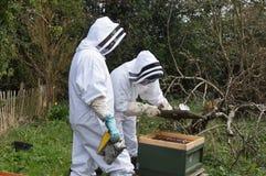 Beekeepers Fotografering för Bildbyråer