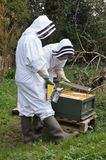 Beekeepers Royalty Free Stock Image