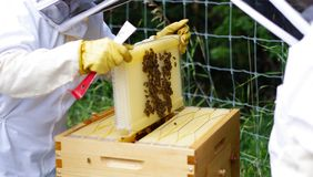 Beekeepers extracting honey from beehive. Beehive with bees and beekeepers Stock Photo