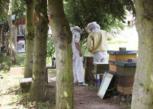 Beekeepers in the Forest. Two beekeepers check their bees in the forest Royalty Free Stock Photography