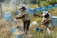 Beekeepers in Greece royalty free stock photography
