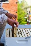 Beekeepers händer Arkivfoto