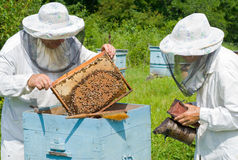 Beekeepers at hive 2 Royalty Free Stock Photo