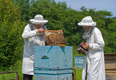 Beekeepers at hive 14. Two beekeepers work on an apiary. Summer, sunny day stock images