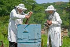 Beekeepers at hive 10 Stock Images