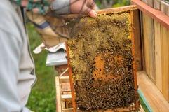 Beekeepers i en skyddande maskering och annan arbetar utrustning som hemma arbetar nära gården Arkivfoto