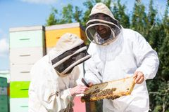 Beekeepers Inspecting Honeycomb Frame At Apiary. Beekeepers in protective workwear inspecting honeycomb frame at apiary royalty free stock images