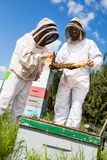 Beekeepers Inspecting Honeycomb Frame. Male and female beekeepers in protective clothing inspecting honeycomb frame at apiary royalty free stock images