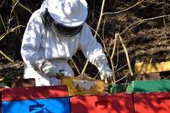 Beekeepers kontrollerad bikupa Royaltyfri Bild