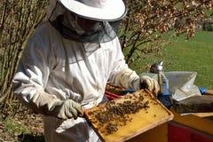 Beekeepers kontrollerade honungskakan Fotografering för Bildbyråer