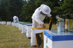 Beekeepers kontrollerar bikupan Royaltyfria Foton