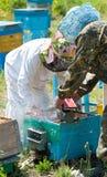 Beekeepers på arbete Fotografering för Bildbyråer