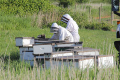 Beekeepers på arbete Arkivfoton