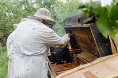 Beekeepers process beehives with honey bees stock photos
