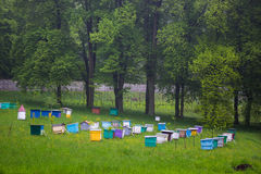 _ Beekeepers som arbetar i bikupa Arkivfoto