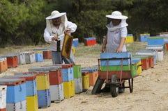 Beekeepers som arbetar med deras färgglade bikupor Arkivbilder
