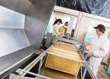 Beekeepers som drar ut Honey From Machine Arkivfoton