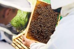 Beekeepers som kontrollerar bikupan Royaltyfria Bilder