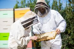 Beekeepers som kontrollerar honungskakaramen Royaltyfri Fotografi