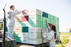 Beekeepers som laddar honungskakaspjällådor i lastbil Royaltyfri Fotografi