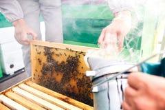 Beekeepers som röker bikupan Royaltyfri Fotografi
