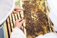Beekeepers som undersöker bikupan Royaltyfri Fotografi