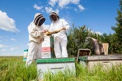 Beekeepers som undersöker honungskakan på bikupan Royaltyfria Bilder