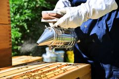 Beekeepers use a smoker. Special tool which is used for calm bees down. Portrait of beekeeper using a smoker to calm down the bees. Beekeeping on sunny day stock photography