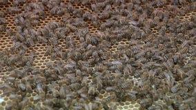Beekeepers at work stock footage