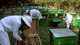 Beekeepers at work stock video