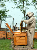 The beekeepers work. The beekeepers collect honey by the bees stock photos