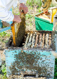 Beekeepers at work Royalty Free Stock Images