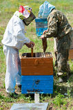 Beekeepers at work Royalty Free Stock Photography