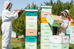 Beekeepers Working At Apiary. Beekeepers in protective clothing working at apiary Stock Photography