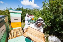 Beekeepers Working In Apiary Stock Image
