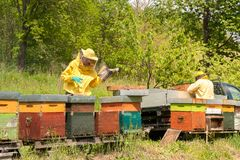 Beekeepers are working with bees and beehives on the apiary. Beekeeping concept royalty free stock photos