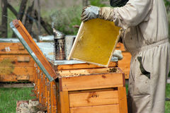 Beekeepersarbetet Royaltyfri Fotografi