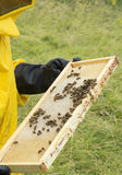 Beekeeping. Close up of beehive with bees stock photo