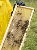 Beekeeping. Close up of beehive with bees stock photography