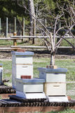 Beekeeping Obrazy Royalty Free