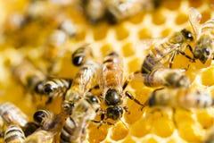Beekeeping zdjęcia royalty free
