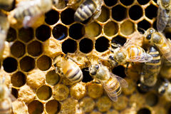 Beekeeping obrazy stock
