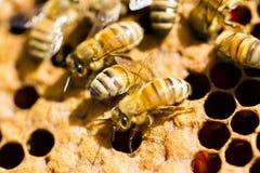 Beekeeping obrazy royalty free