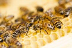 Beekeeping zdjęcie stock