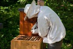 beekeeping Lizenzfreie Stockfotos
