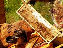 Beekeeping in action. Bees on a honeycomb which is full of honey, some smoke and sunny day royalty free stock image