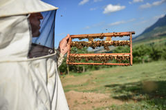 Beekeeping activities and work. Beekeeping ;beekeeping activities and work stock photography
