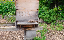 Beekeeping. Apiary wooden boxes with bees stock image