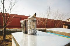 A beekeeping basic equipment - bee smoker - on the top of bee hive on a spring day. Close up stock images