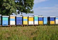 Beekeeping stock photo